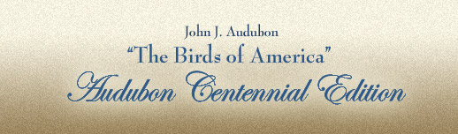 Audubon Centennial Edition – The Birds of America